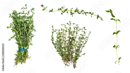 Fotografie, Obraz  various bunches and twigs of fresh thyme herb
