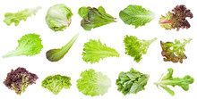 Various Leaves Of Lettuce Vege...
