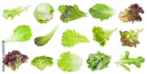 various leaves of lettuce vegetables isolated Fototapeta