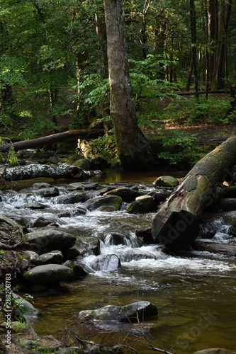 Garden Poster Forest river Deep Roots in the River