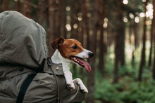 Woman Walking Inside Forest With Her Dog