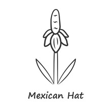Mexican Hat Wild Flower Linear...