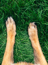 Dog Paws In Grass