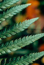 Detail Of A Fern Leaf