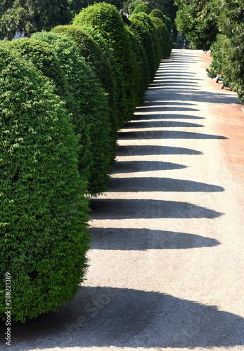 Obraz Langer Weg mit Schatten von am Wegesrand stehenden Büschen - fototapety do salonu