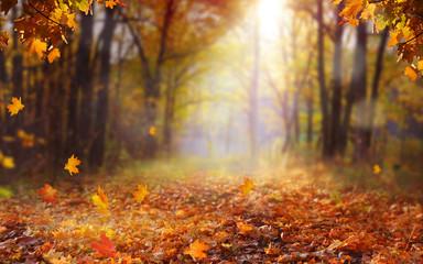 Beautiful autumn landscape ...