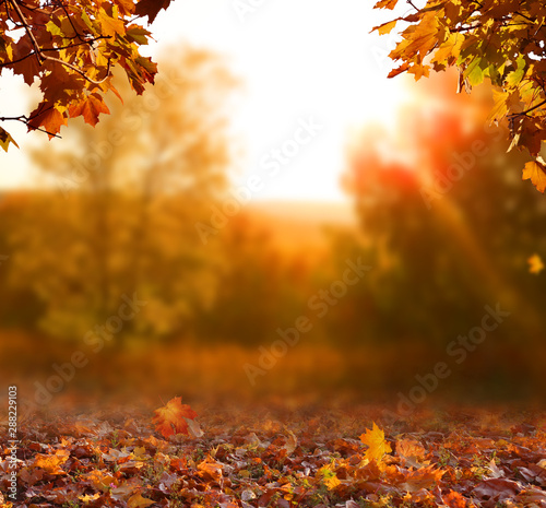 Campagne Beautiful autumn landscape with yellow trees,green and sun. Colorful foliage in the park. Falling leaves natural background