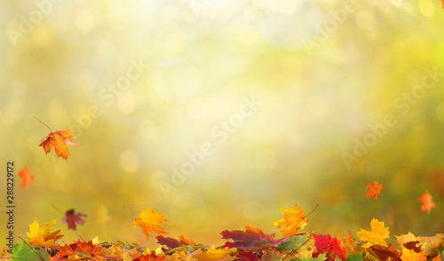 Photo sur Toile Beige Autumn maple leaves.Falling leaves natural background.