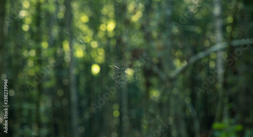 Photo spider web soaring in air on unfocused blurred green forest foliage natural back