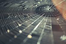 Spider Web Macro Background. I...