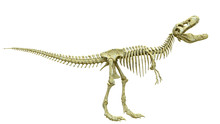 Tyrannosaur Skeleton Is Angry Side View