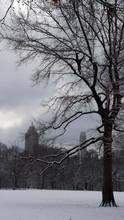 Tree Winter Landscape Central ...