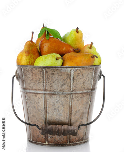 Photo Pail full of fresh picked Bartlett and Bosc Pears