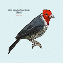Red-crested Cardinal, Paroaria...