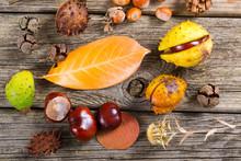 Fallen Autumn Growths And Leav...