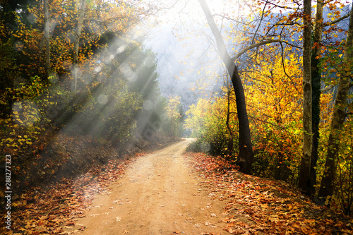 Cadres-photo bureau Automne Landscape image of dirt countryside dirt road with colorful autumn leaves and trees in forest of Mersin, Turkey