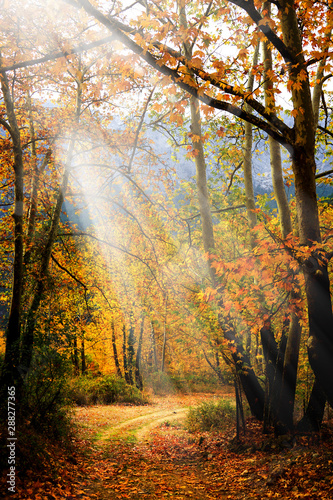Foto Rollo Basic - Landscape image of dirt countryside dirt road with colorful autumn leaves and trees in forest of Mersin, Turkey (von jokerpro)