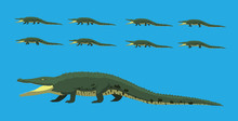 Cartoon Alligator Walking Animation Vector