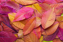 Colorful Background With Autum...