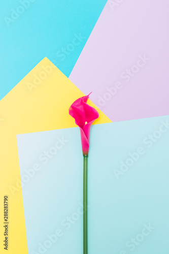 Obraz na plátně  Lily flower on geometric yellow, blue and pink background