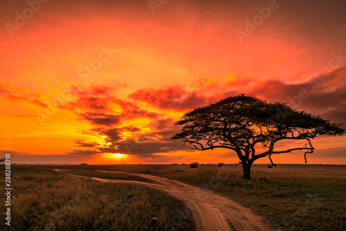 Poster Corail Beautiful sunrise over the plains of the Serengeti national park in Tanzania