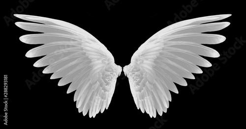 Foto  white wing of bird on black background