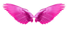 Pink Wings Of Bird On White Background