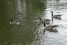 Park Pond Wildlife