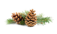 Fir Tree Branches And Pine Cones On White Background