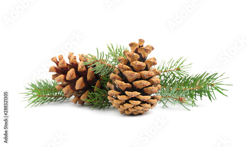 Obraz Fir tree branches and pine cones on white background - fototapety do salonu