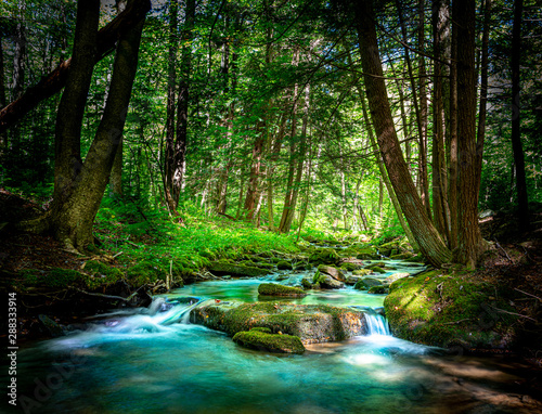 Foto op Canvas Bomen Beautiful Mountain Stream Flowing Through the Northern Pennsylvania Hemlock Forest