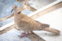 City Bird On The Street