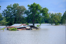 House With Flood,Flooding  Of Rice In The Thai Countryside,Natural Disaster Background