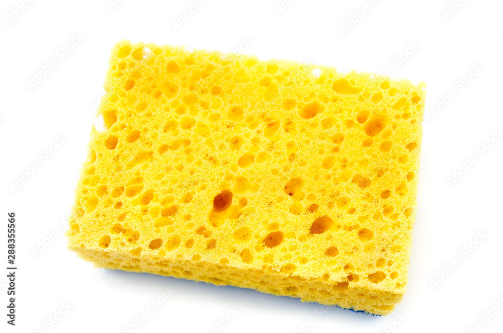Fototapeta yellow sponge