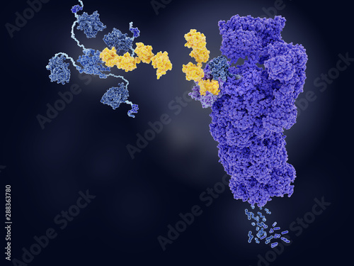 The tumor suppressor p53, tagged with ubiquitin, is degraded by a proteasome Canvas Print