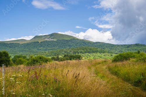 Foto auf Gartenposter Hugel Tarnica, najwyższy szczyt w Polskich Bieszczadach, kwiecista łąka