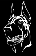 Doberman Portrait With A Red C...