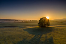 Sunrise Over A Tree In The Yor...