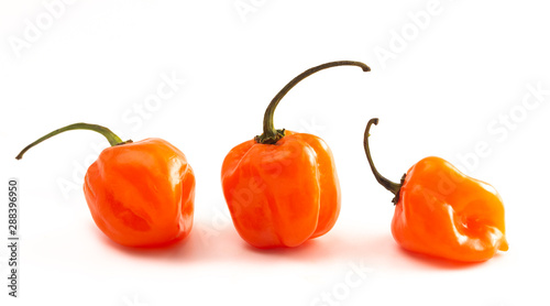 Spicy Orange Habanero Pepper Isolated on a White Background