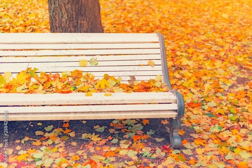 Fallen Leaves On Wooden Bench In Empty Park Autumn