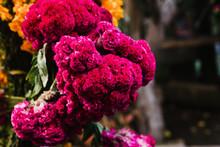Flor De Terciopelo O Celosia, Mexican Flowers For Offerings Ofrendas In Dia De Muertos Day Of The Dead Mexican Tradition