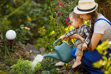 Woman Gardener And Son Waterin...