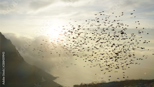 Photo large group of flying bats, mega bats in the sky