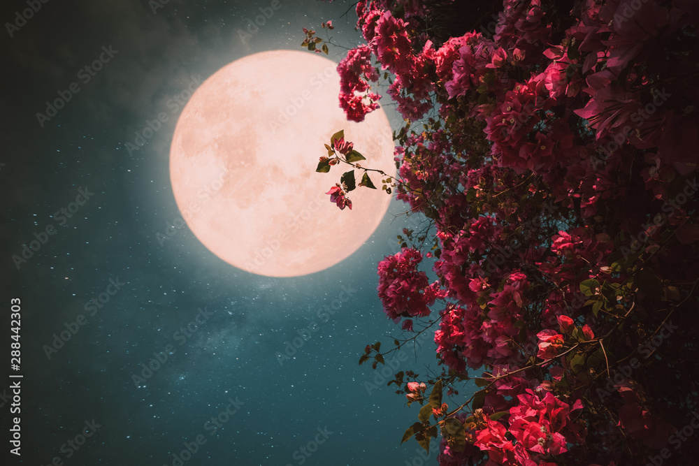 Fototapeta Romantic night scene - Beautiful pink flower blossom in night skies with full moon. - Retro style artwork with vintage color tone.
