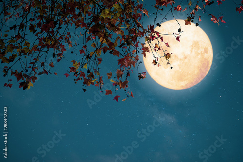 Foto op Canvas Groen blauw Beautiful autumn fantasy - maple tree in fall season and full moon with star. Retro style with vintage color tone. Halloween and Thanksgiving in night skies background concept.