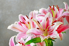 Pink And Red Lily Flowers On G...