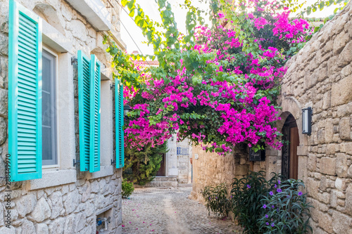 Bougainvillaea ans blue shutters