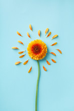 Beautiful Yellow Gerbera Flower With Petals On Blue. Autumn Sunny Day Concept. Creative Idea In Flat Lay Style.