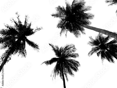 Foto auf AluDibond Palms silhouette of palm trees