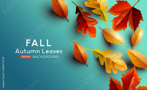 Red and golden coloured Autumn leaves on a blue background. Vector illustration. - 288474709